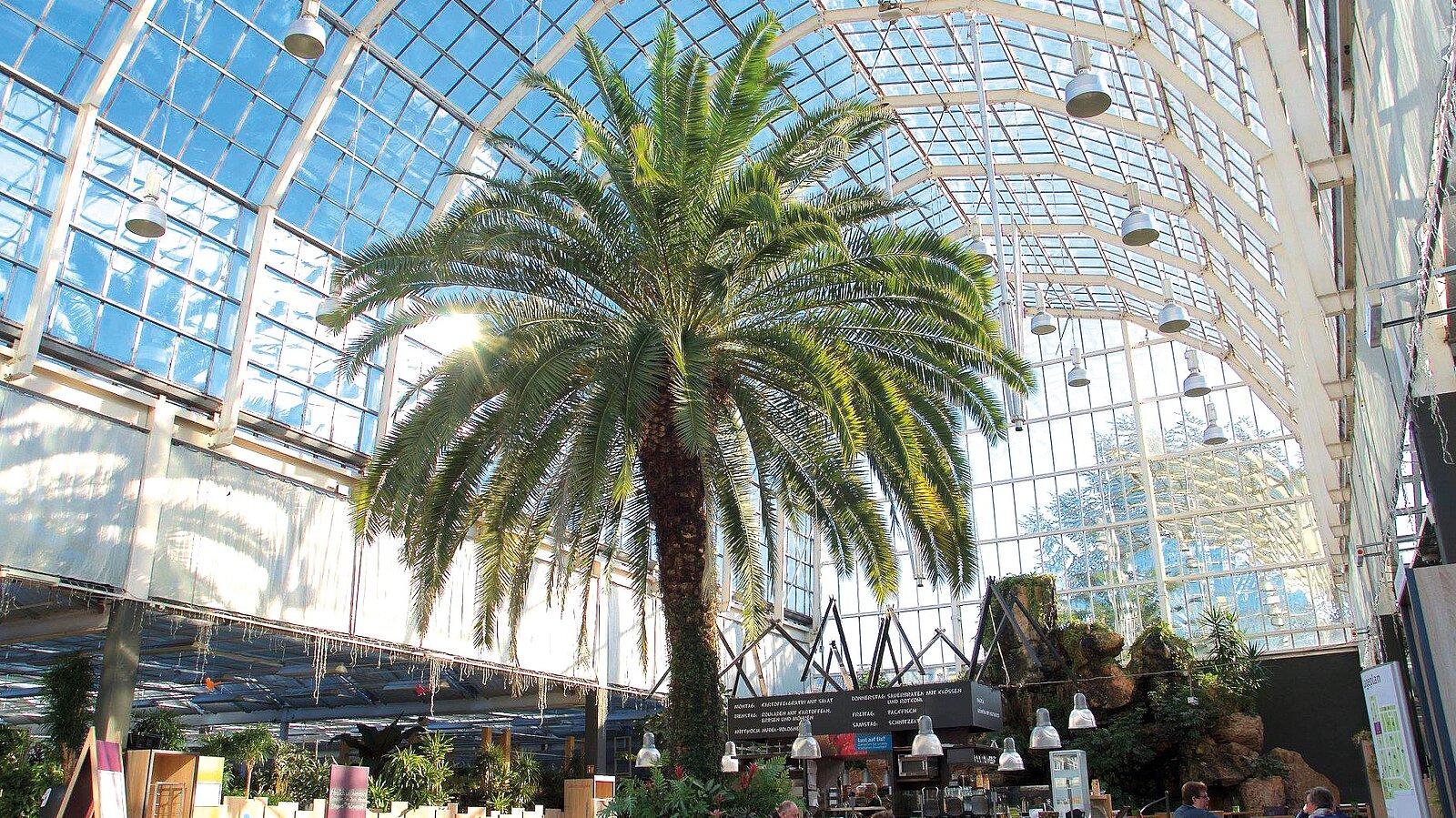 Kölns Größtes Gartencenter